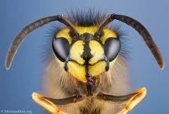 6_wasp